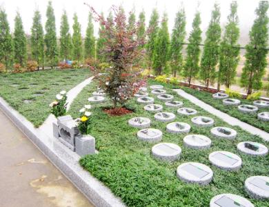 樹木や草花に囲まれた樹木葬墓地