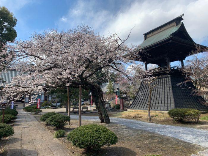 栃木県慈眼寺春の境内